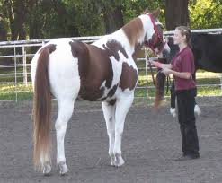 flying dollar ranch u0027s halloween horse show italy neotribune
