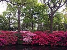 Azalea Topiary Eve Hacking Evegardendesign Twitter
