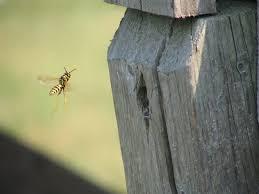 top tips for yard pest control in vancouver solutions pest control