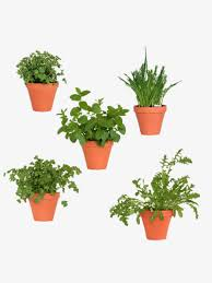 small potted plants small potted plants color potted plant png image and clipart for