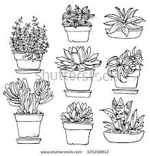 the 25 best botanical line drawing ideas on pinterest line
