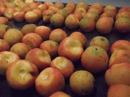 fresh dates fruit secrets of a seed scatterer fresh dates