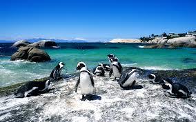 swimming with animals around the world travel leisure