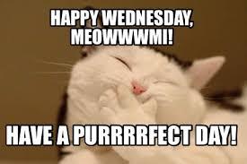 Aww Shucks Meme - meme creator flattered cat meme generator at memecreator org