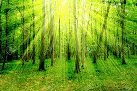 forest glade stock photos royalty free forest glade images and