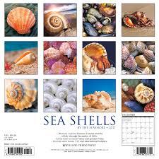 sea shells 2017 wall calendar willow creek press 6531847622758
