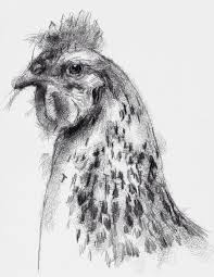 503 best drawing animals images on pinterest drawing animals