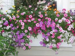 Summer Flower Garden Ideas - 1040 best flower box fancy images on pinterest window boxes