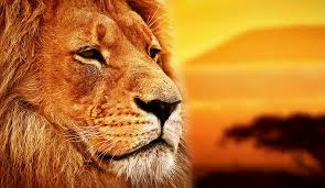 20 beautiful african words u0027the lion king u0027 bring