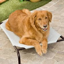 coolaroo elevated pet bed with replacement cover hayneedle