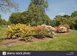 Royal Botanic Gardens Kew Richmond Surrey Tw9 3ab The Azalea Garden In The Royal Botanic Gardens Kew Surrey