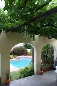 How To Grow Grapes In Your Backyard by Growing Grapes On A Pergola
