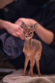 best 25 baby deer ideas on pinterest fawning definition deer