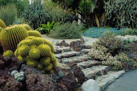 california native plant landscape design examples the best types of cactus to grow in your garden
