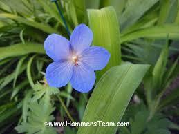 another last blast of summer flowers bergen county new jersey