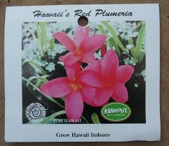 native hawaiian plants for sale perfect plumeria