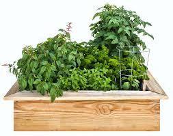 easy and tasty 4 x 4 foot kids u0027 garden bonnie plants