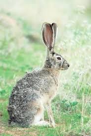 Emma Freud Rabbit Hutch Bunny Hugging U0027 Government Scraps Rabbit Control Measures