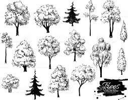 White Oak Tree Drawing Big Set Of Hand Drawn Tree Sketches Stock Vector Art 504286814