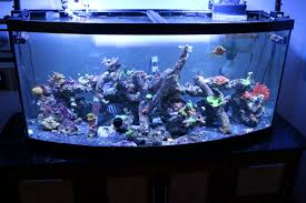 Live Rock Aquascaping Aquascaping With Different Types Of Rock Reef2reef Saltwater