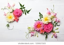 flower images flower stock images royalty free images vectors shutterstock