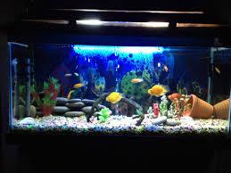 106812d1360156654 biggest fish tank i ever had happy tank image