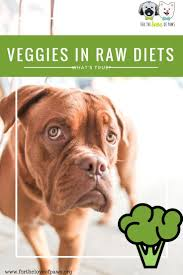 753 best raw dog food images on pinterest a natural baby dogs