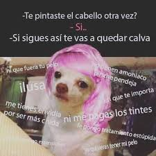 Memes De Chihuahua - el momo shido del chihuahua funny pinterest memes meme and humour