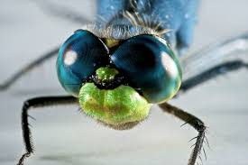 birds eat mosquitoes but are not a miracle cure