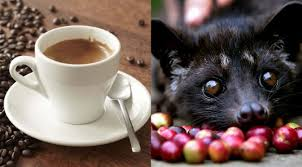 Luwak Coffee 12 benefits of luwak coffee for health and healthy t1ps