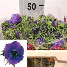 Flowers Wholesale Wholesale Dutch Flowers Wholesale Floral Supplier