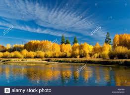 fall colored aspen trees and deschutes river central oregon stock