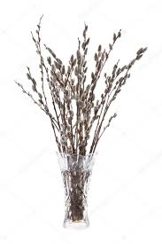 Branches In A Vase Branches Of The Willow With Flowering Bud In Vase With Wat