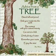 69 best trees quotes words images on tree
