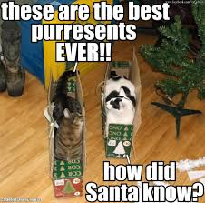 Merry Christmas Cat Meme - c a a cat addicts anony mouse don t you remember clawing santa s