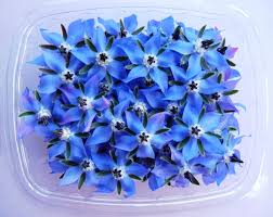 edible blue flowers exles of edible flowers and leaves firstleaf