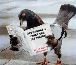 Pigeons Images?q=tbn:ANd9GcSuSjbpQcu7hGAfAQrpW-iErm-RuBu5ZxN-7LzQkPqpUN4vHIWlQg
