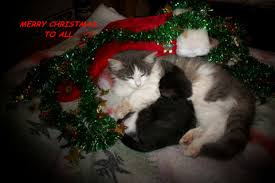 merry cats free merry christmas wishes ecards greeting cards