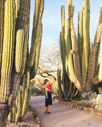 arizona native plants list the ultimate arizona bucket list 101 things to do in arizona