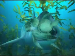 turtle u0027s tale sammy u0027s adventures clip shark video dailymotion