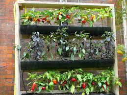 Home Vegetable Garden Ideas Brilliant Ideas Vertical Vegetable Garden Design Home