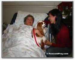 This Little Light Of Mine Blog This Little Light Of Mine Comfort Dogs U2013 Pawz U0026 Pray