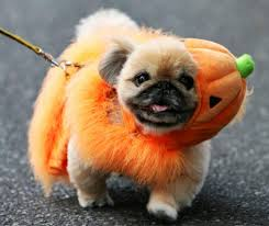 Halloween Dogs Costumes 2017