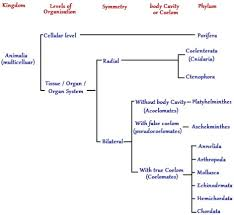 animal kingdom classification chart biology tutorvista com