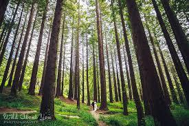 Berkeley Botanical Garden Wedding Sayre S Berkeley Redwoods Wedding About You Photography