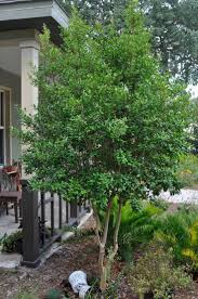 20 best landscaping ideas zone 9 and 10 florida images on