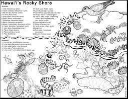 unbelievable tide pool animals coloring pages for kids with