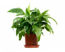 five reasons your houseplants die and how to save them out front