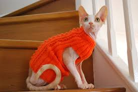 sweaters for cats so sphynx cat clothes sphynx cat sweater small clothes