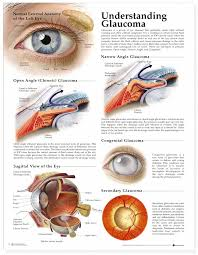 The Anatomy And Physiology Of The Eye 165 Best Ophthalmology Images On Pinterest Eye Facts Optometry